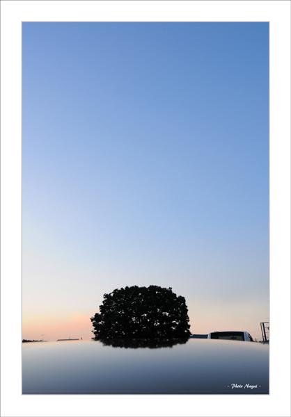 2015-10 いつもの木 - 大和市-10.jpg