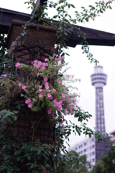 9月-ペロ-雨の山下公園-横浜-1.jpg