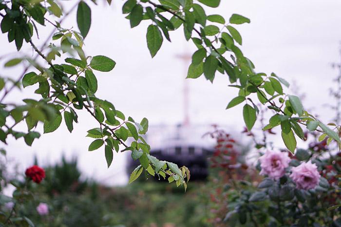 9月-ペロ-雨の山下公園2-横浜-2.jpg