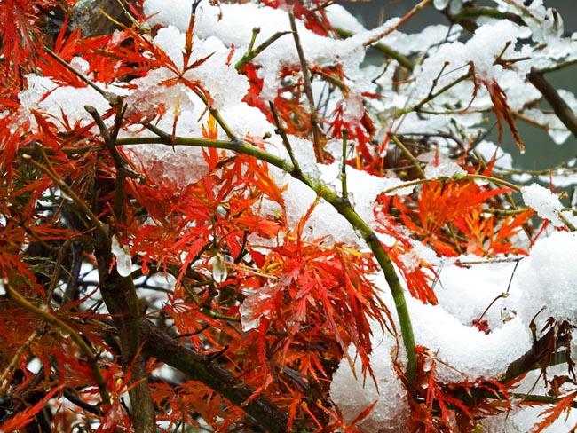 雪が降る2.世田谷.jpg