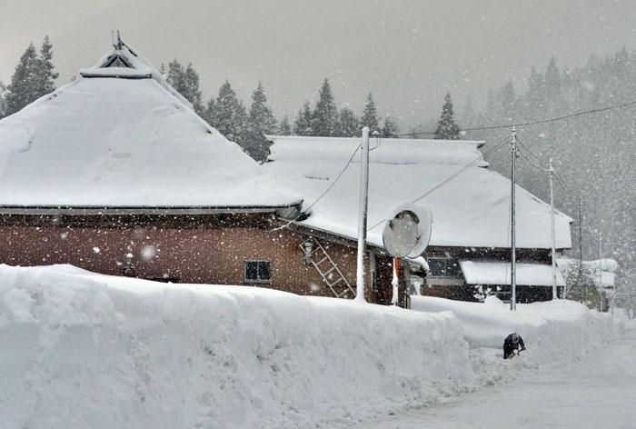 雪片し 2.JPG