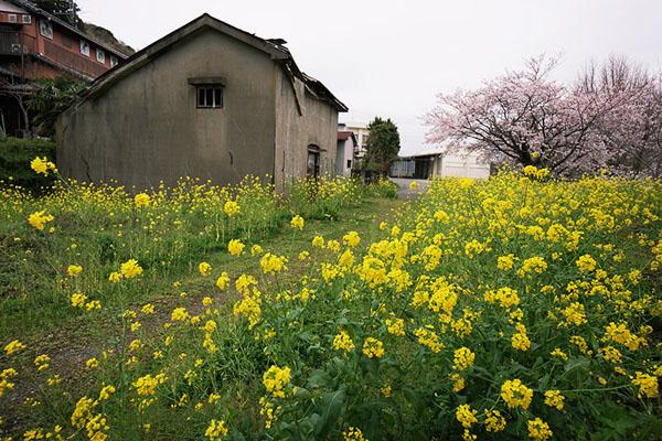 5月-菜の花の咲く頃Ⅱ-千葉-5.jpg