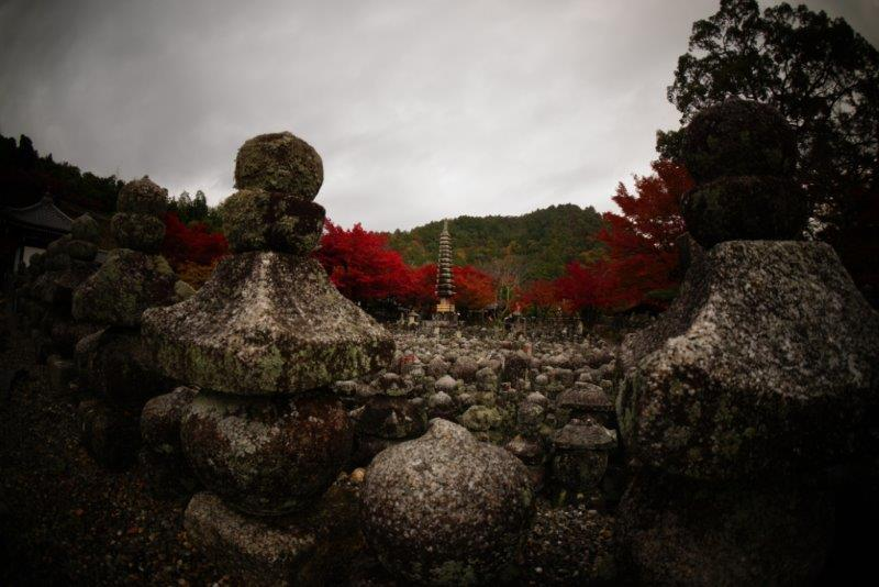 take京都の紅2.jpg