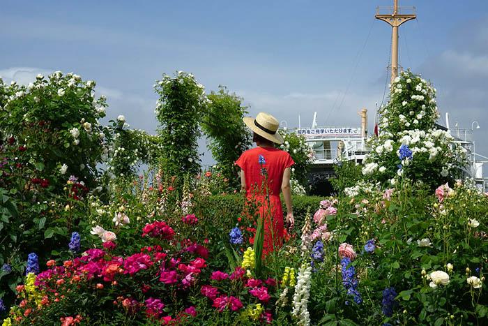 ペロー初夏-横浜のコピー.jpg