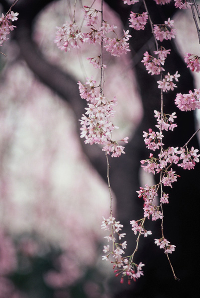 春麗ゆきちゃん-5.jpg