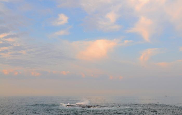 江ノ島-藤沢市-1.jpg